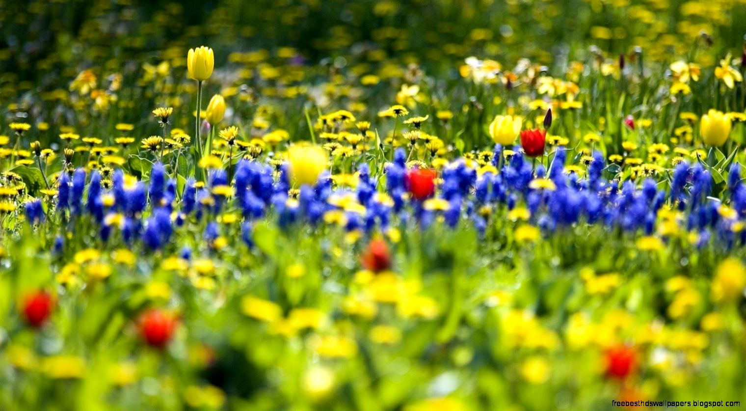 Reflection For July 24 2016 By Eleanor Rabnett on Library Bulletins For Spring